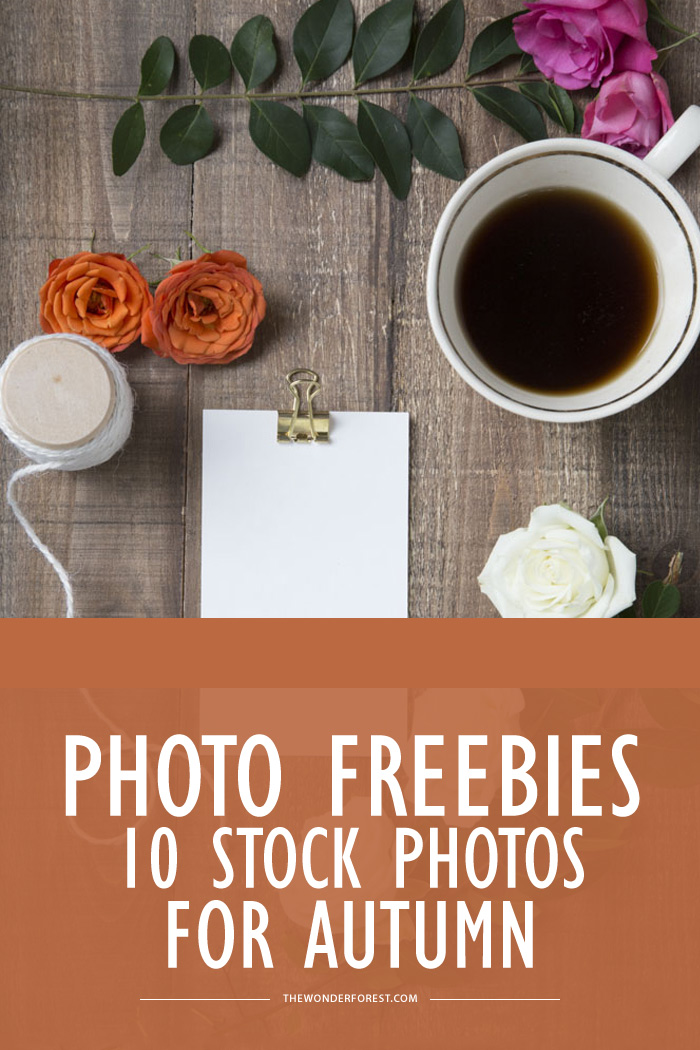 Photo Freebies: 10 Stock Photos for Autumn