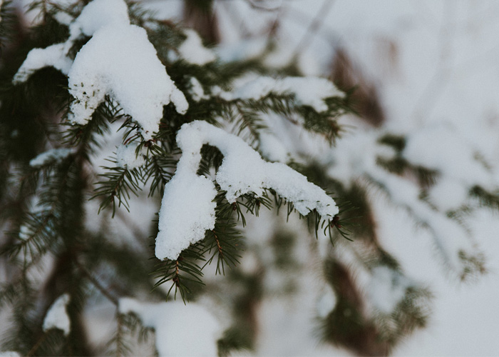 Photo Freebies: 5 Charming Stock Photos for Winter