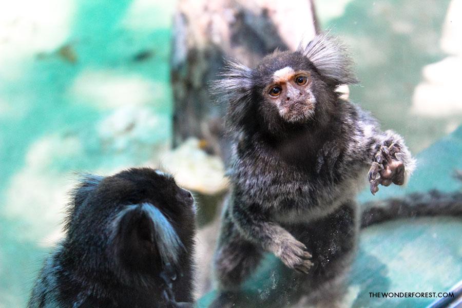 Akumal Monkey Sanctuary in Mexico