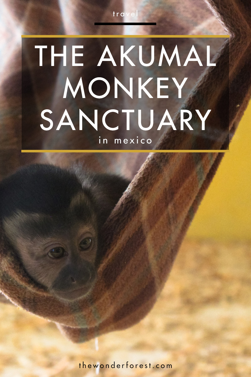 Akumal Monkey Sanctuary in Mexico