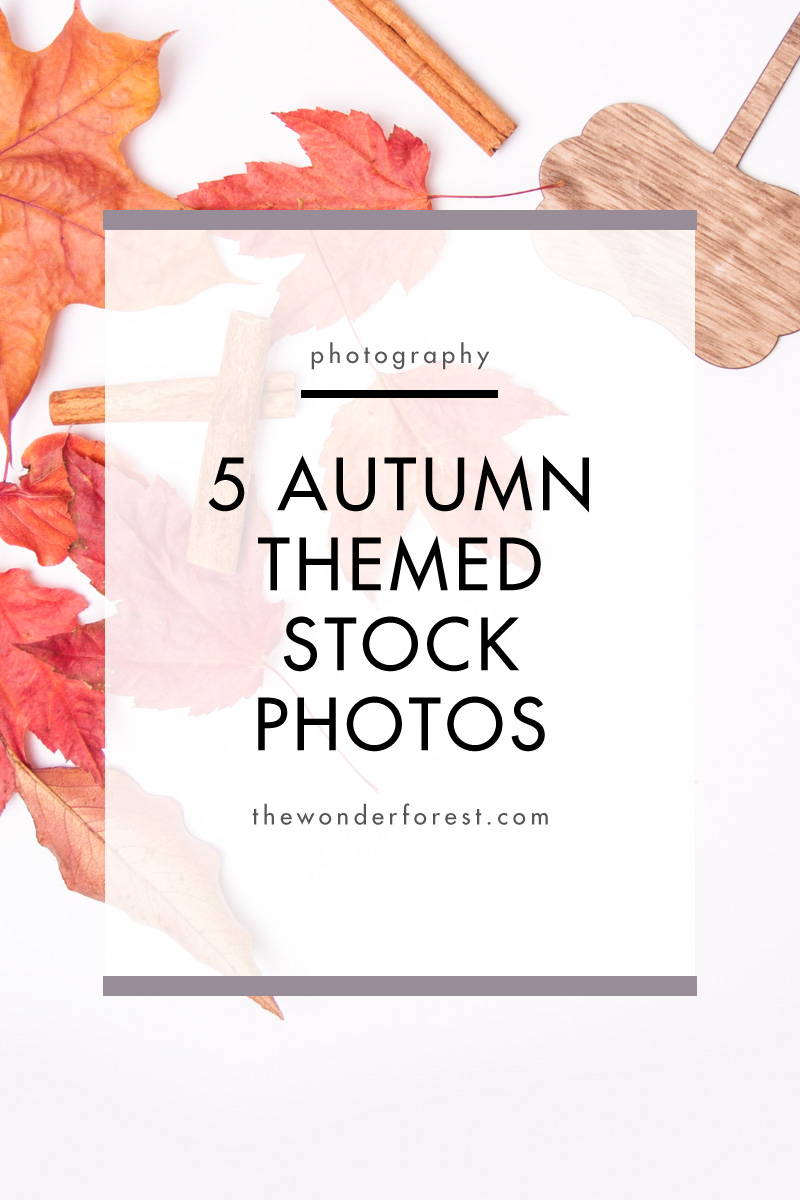 5 Free Autumn Themed Stock Photos For Your Brand
