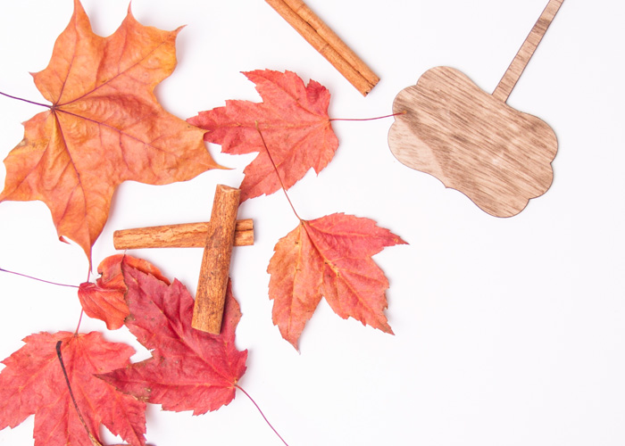 5 Free Autumn Themed Stock Photos To Use For Your Brand