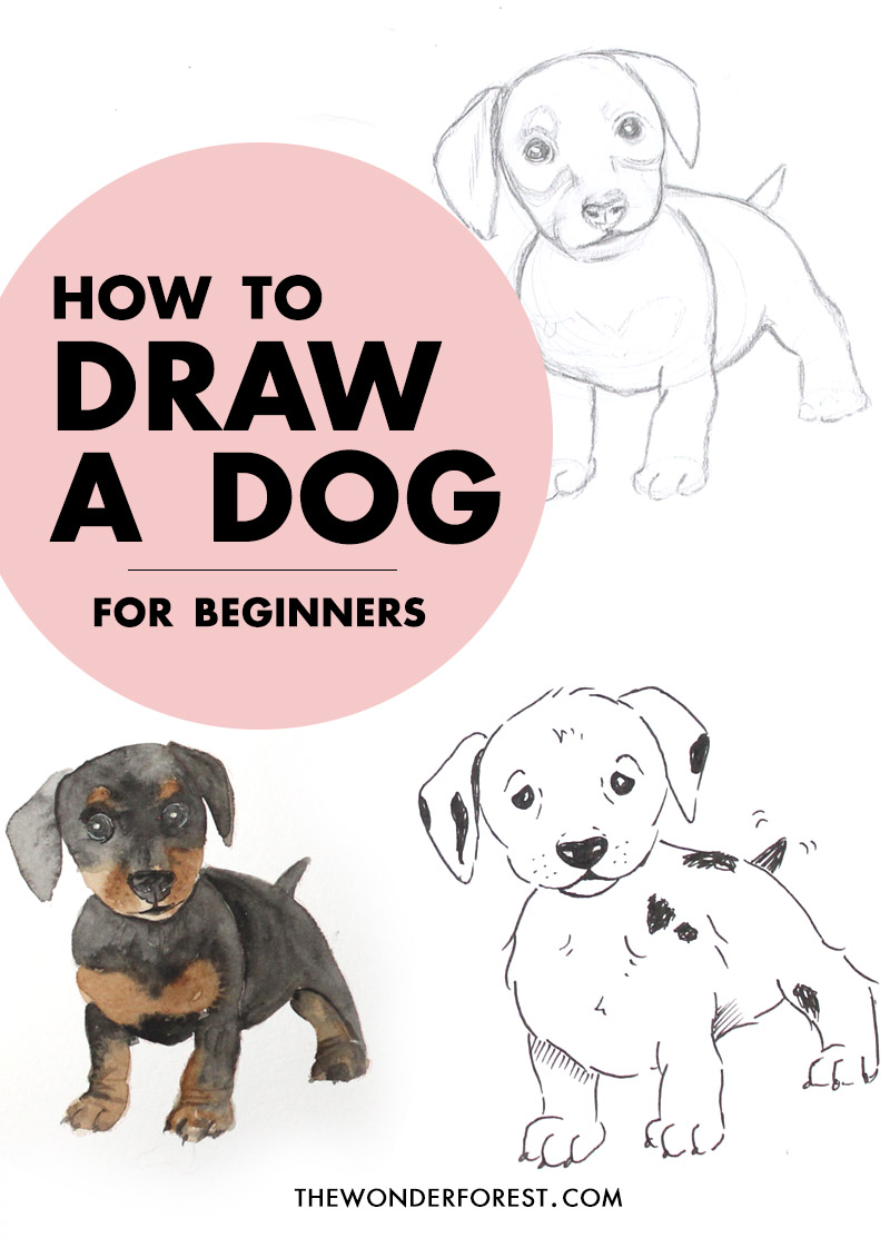 Learn how to draw any animal