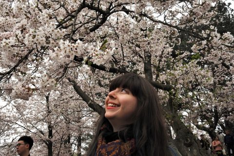 Finding Cherry Blossoms in Toronto: A Tropical Adventure