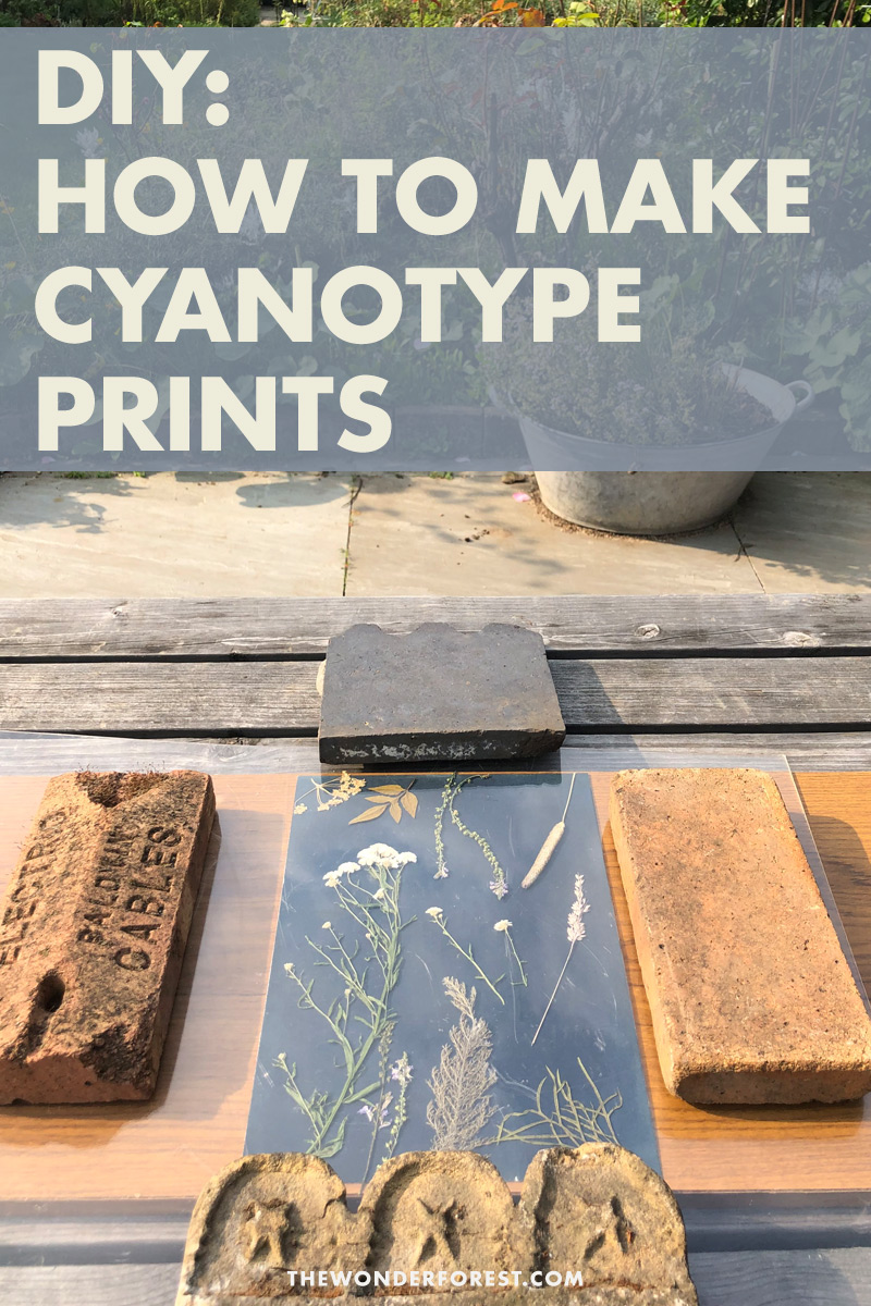 How To Make A Basic DIY Cyanotype Print