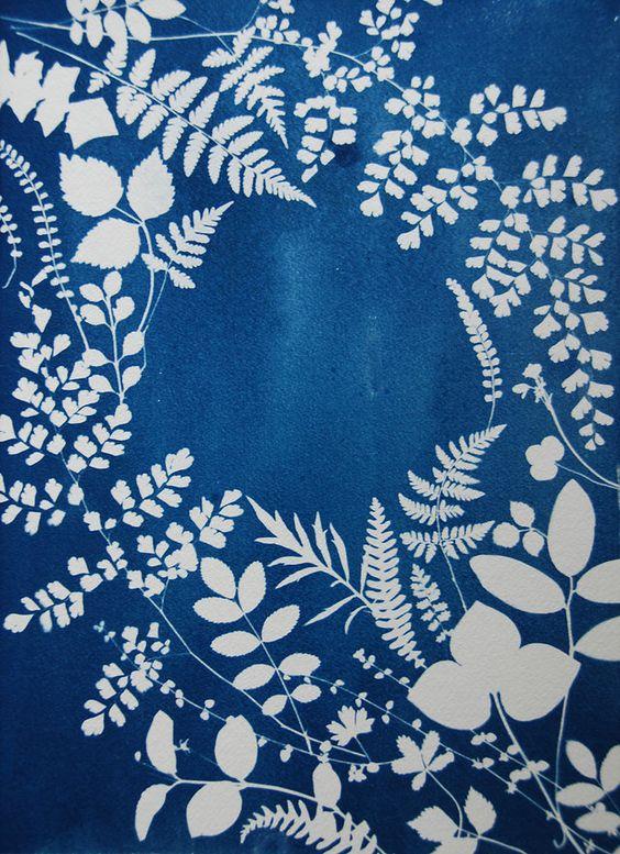 Cyanotype Sun Print