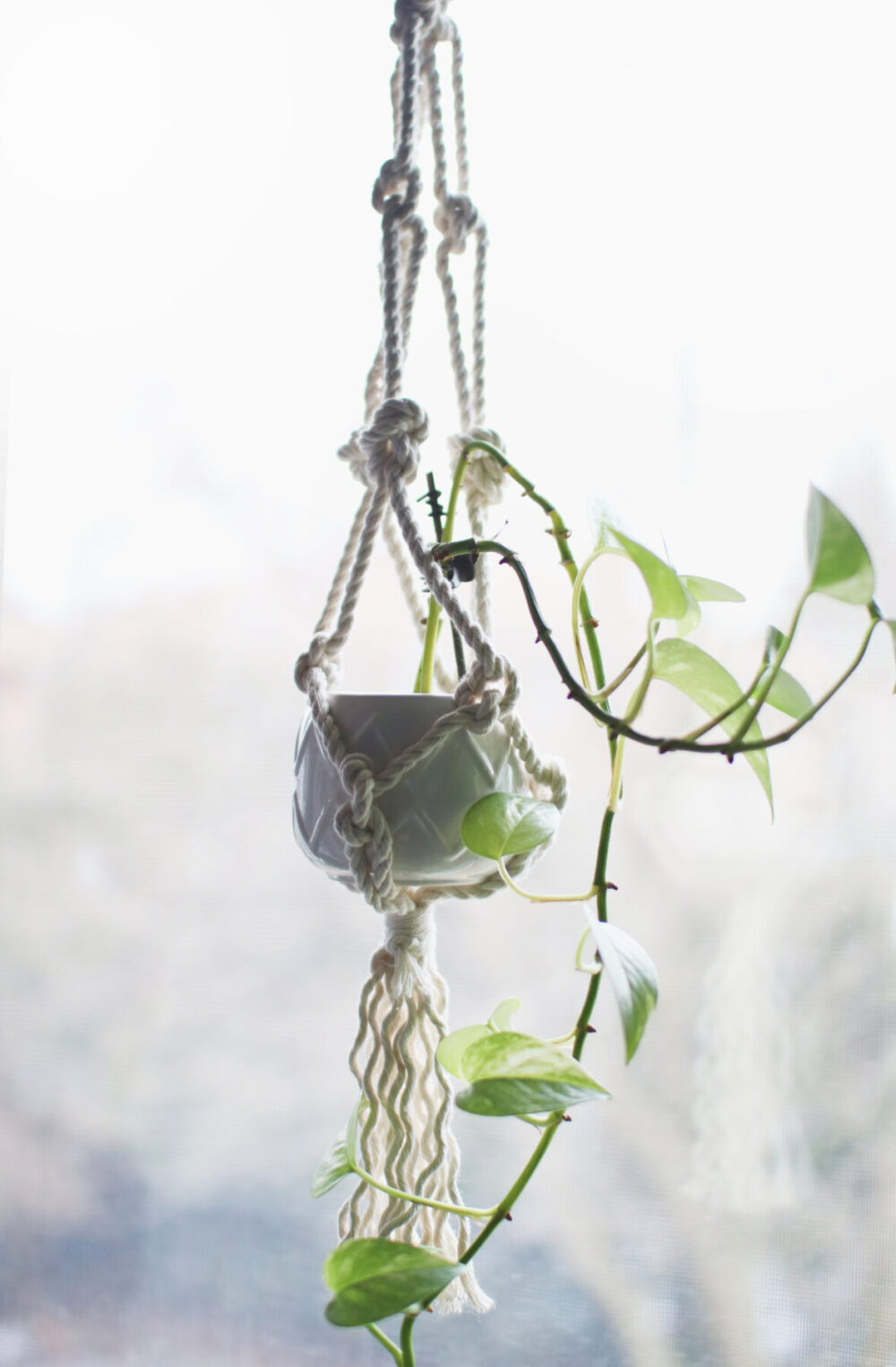 Macrame Plant Hanger DIY For Beginners