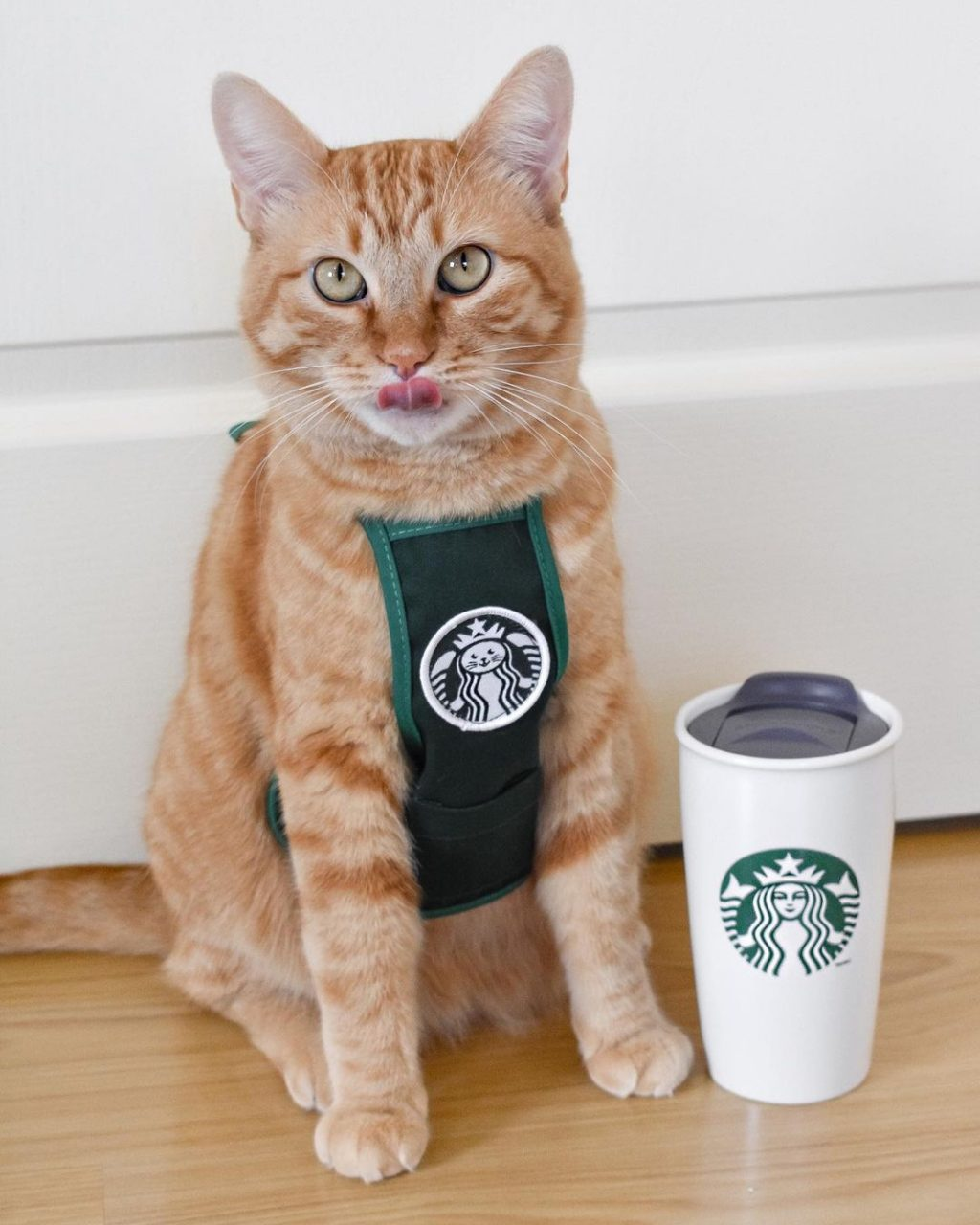 15 Creative Halloween Costumes For Your Pets